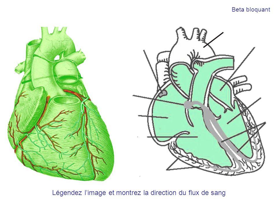 Légendez l'image et montrez la direction du flux de sang