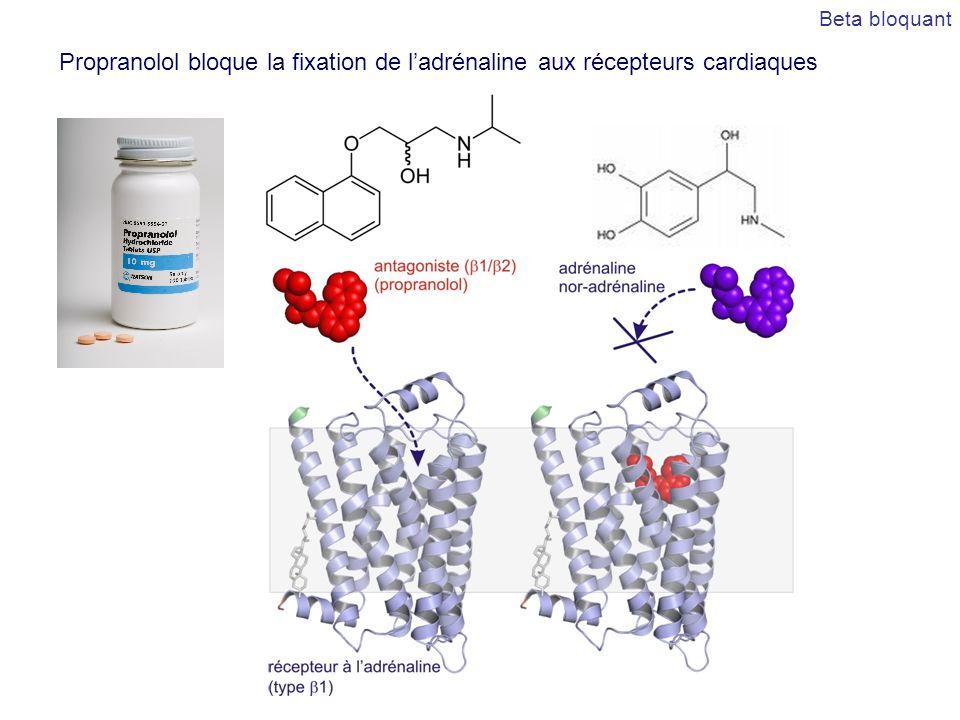 Beta bloquant Propranolol bloque la fixation de l'adrénaline aux récepteurs cardiaques