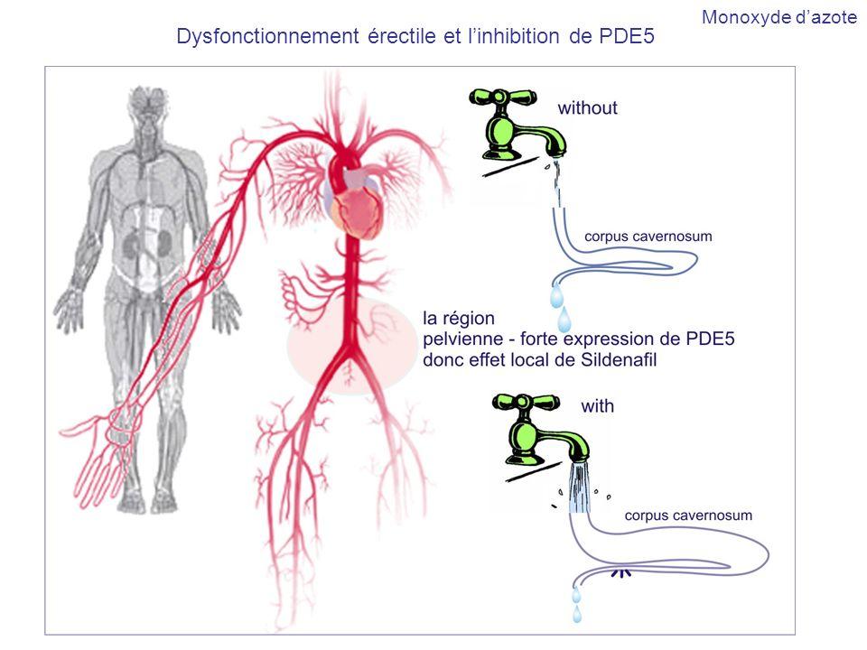 Dysfonctionnement érectile et l'inhibition de PDE5