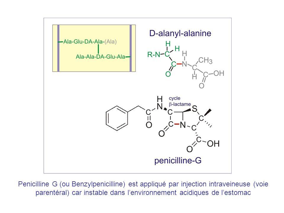 Penicilline G (ou Benzylpenicilline) est appliqué par injection intraveineuse (voie parentéral) car instable dans l'environnement acidiques de l'estomac