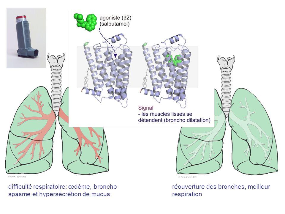 difficulté respiratoire: œdème, broncho spasme et hypersécrétion de mucus