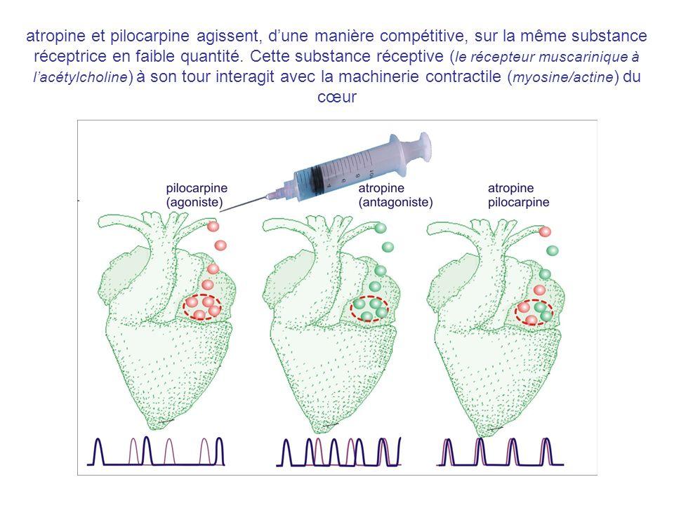 atropine et pilocarpine agissent, d'une manière compétitive, sur la même substance réceptrice en faible quantité.
