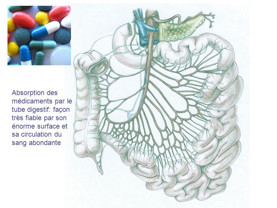 Absorption des médicaments par le tube digestif: façon