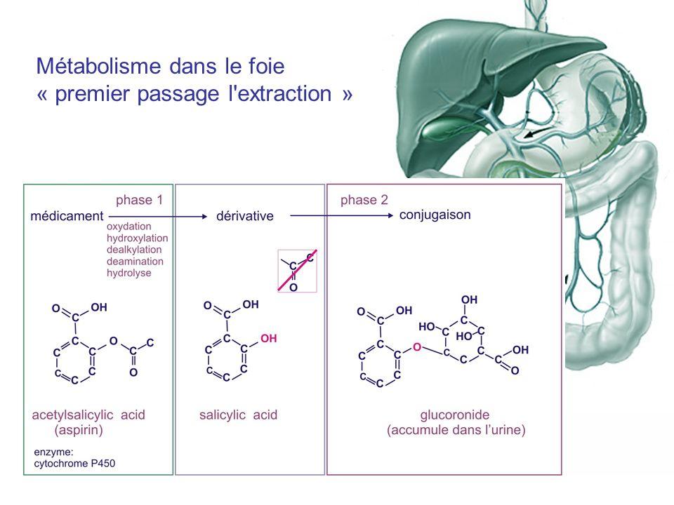Métabolisme dans le foie « premier passage l extraction »