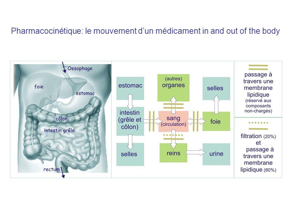 Pharmacocinétique: le mouvement d'un médicament in and out of the body