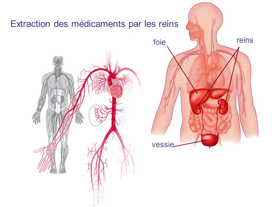 Extraction des médicaments par les reins