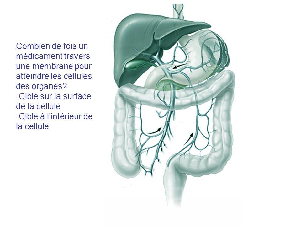 Combien de fois un médicament travers une membrane pour atteindre les cellules des organes