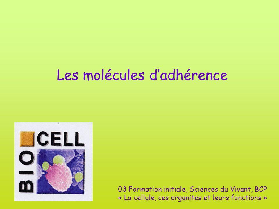 Les molécules d'adhérence