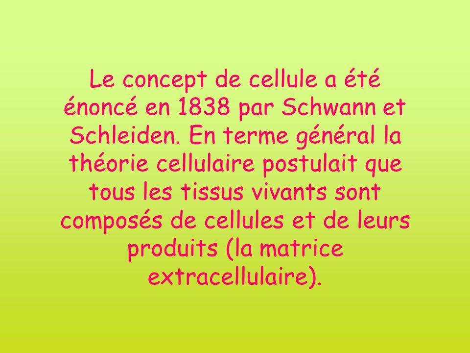 Le concept de cellule a été énoncé en 1838 par Schwann et Schleiden