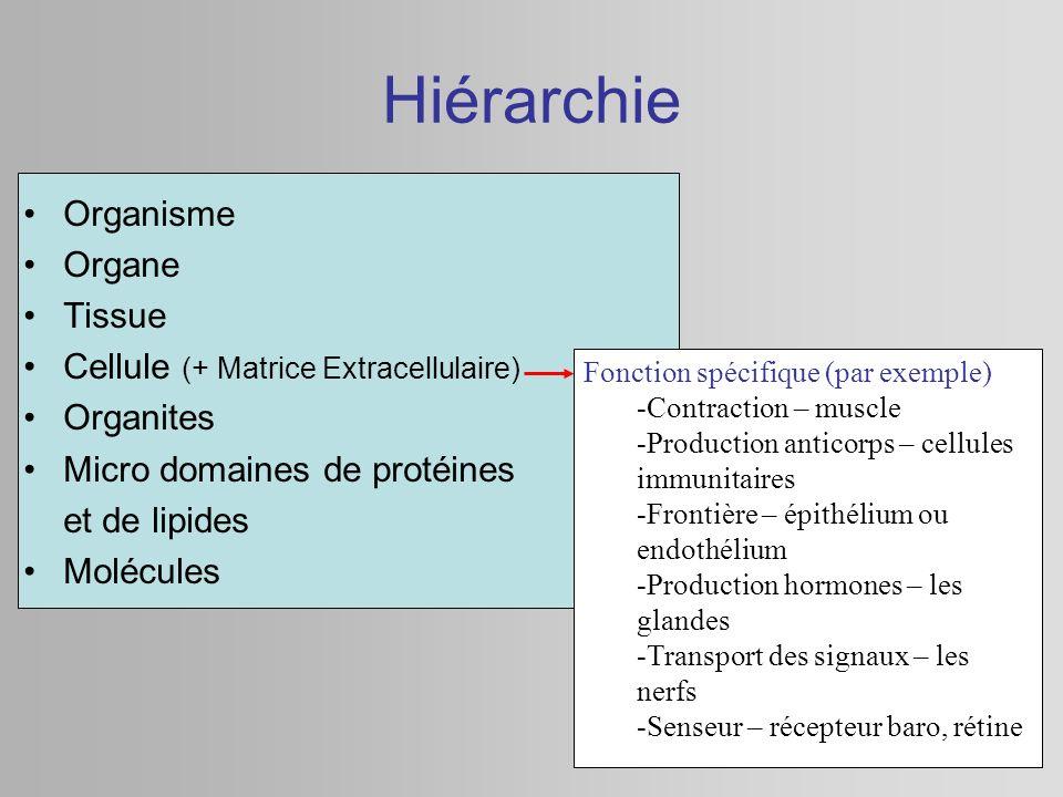 Hiérarchie Organisme Organe Tissue Cellule (+ Matrice Extracellulaire)