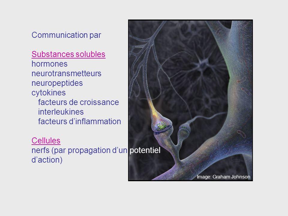facteurs de croissance interleukines facteurs d'inflammation Cellules