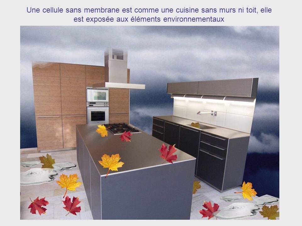 Une cellule sans membrane est comme une cuisine sans murs ni toit, elle est exposée aux éléments environnementaux