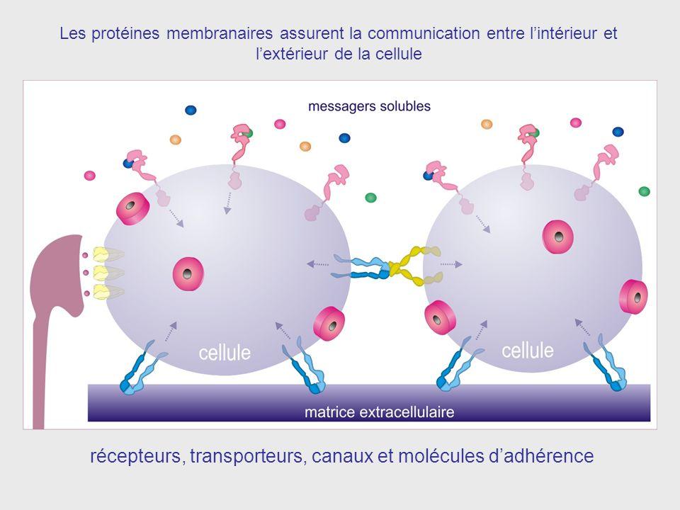 récepteurs, transporteurs, canaux et molécules d'adhérence
