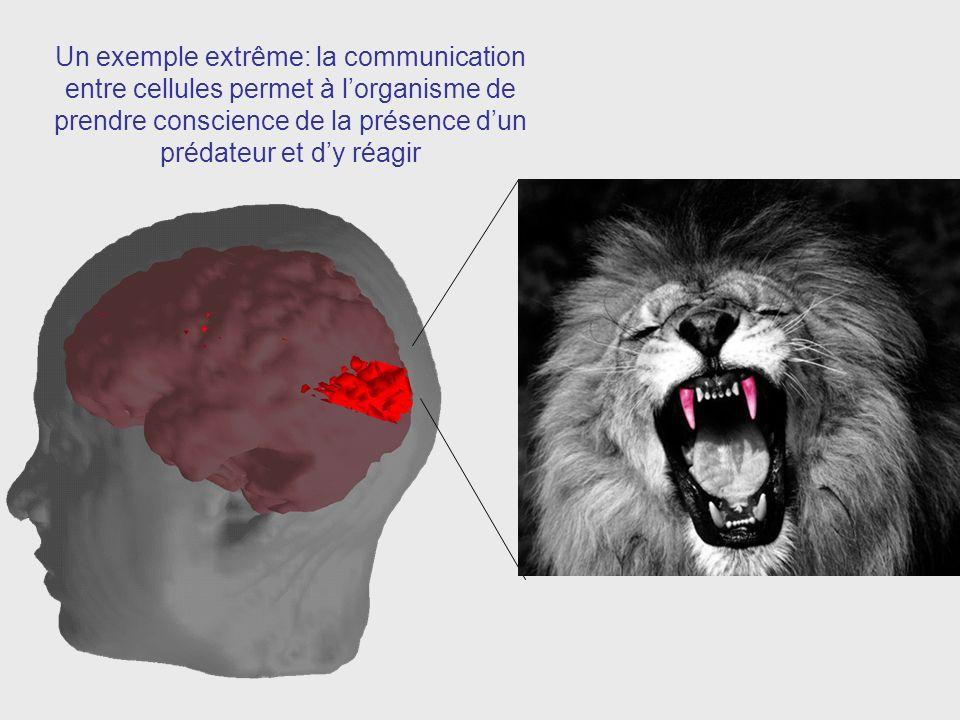 Un exemple extrême: la communication entre cellules permet à l'organisme de prendre conscience de la présence d'un prédateur et d'y réagir