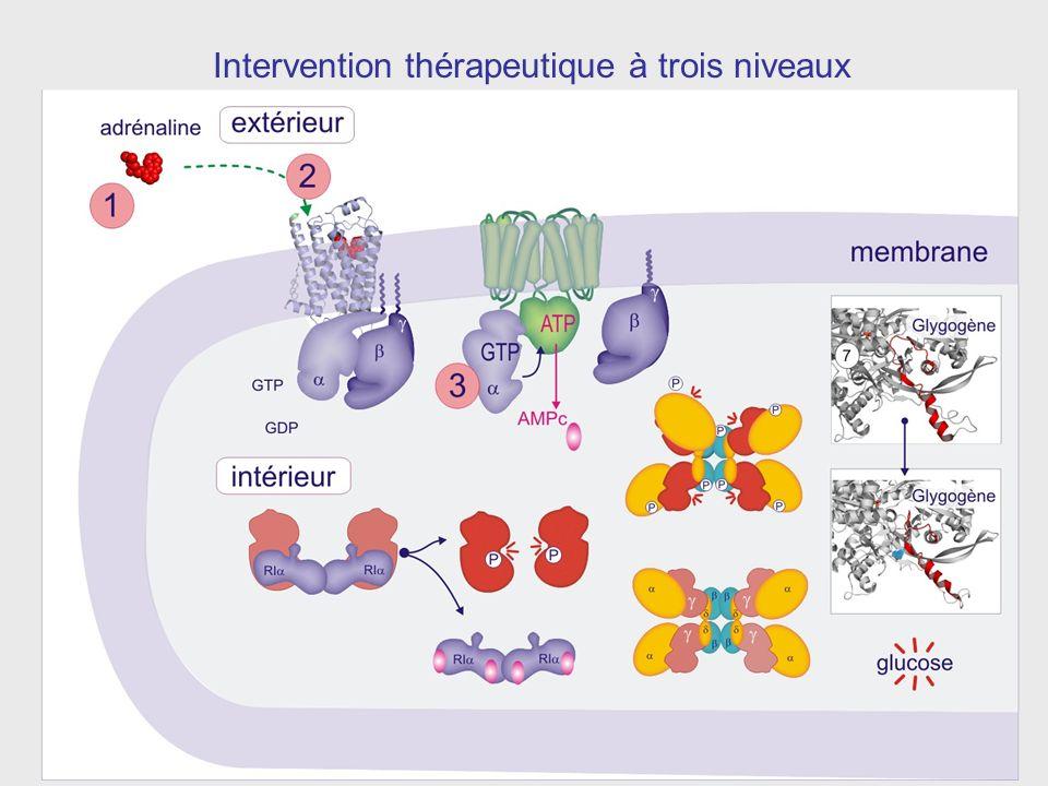 Intervention thérapeutique à trois niveaux