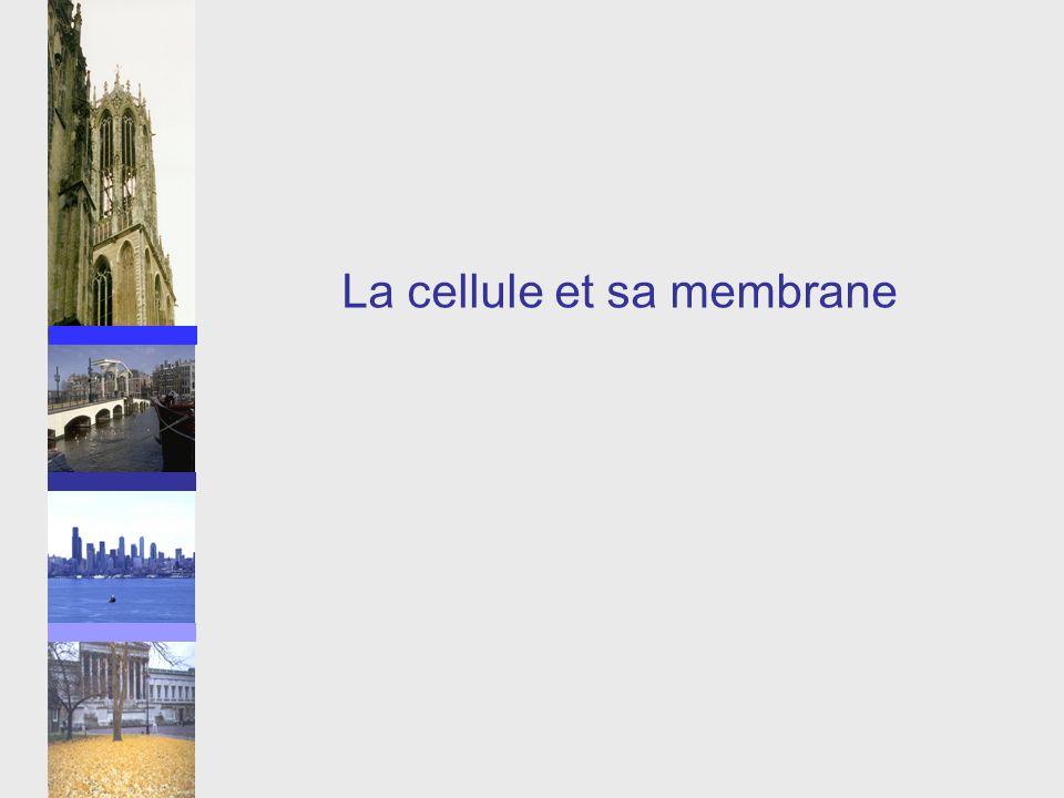 La cellule et sa membrane