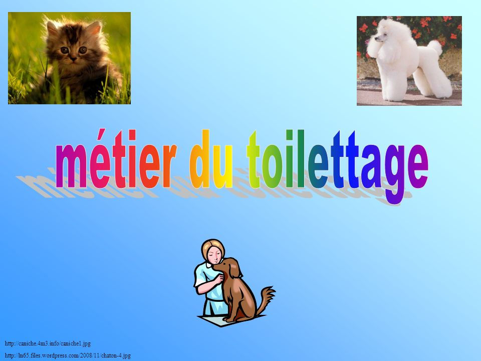 métier du toilettage http://caniche.4m3.info/caniche1.jpg