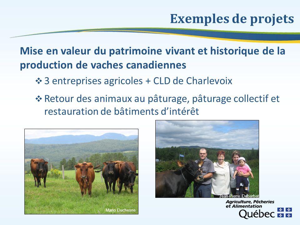 Exemples de projets Mise en valeur du patrimoine vivant et historique de la production de vaches canadiennes.