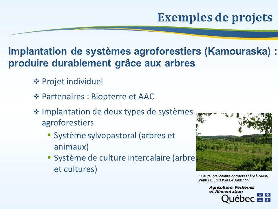 Exemples de projets Implantation de systèmes agroforestiers (Kamouraska) : produire durablement grâce aux arbres.
