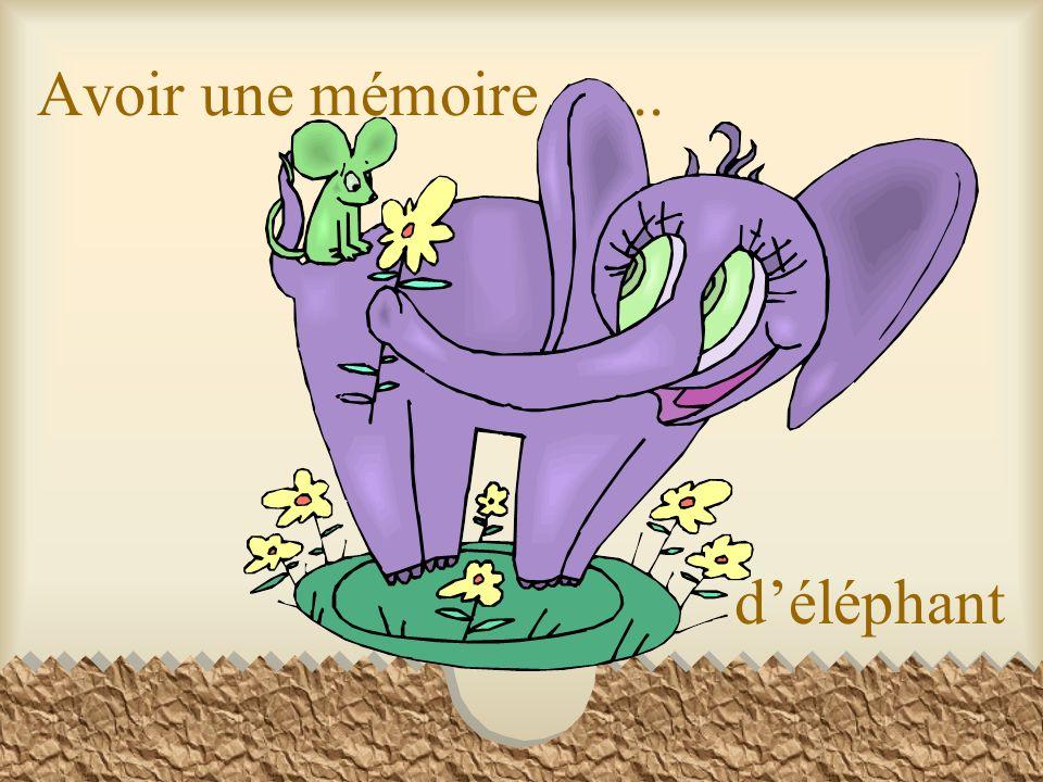 Avoir une mémoire ….. d'éléphant