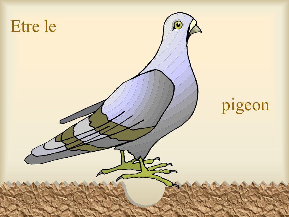 Etre le pigeon