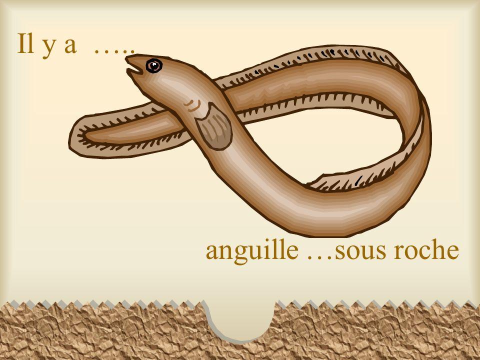 Il y a ….. anguille …sous roche
