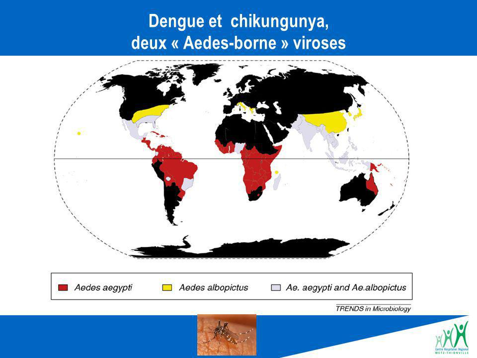 Dengue et chikungunya, deux « Aedes-borne » viroses