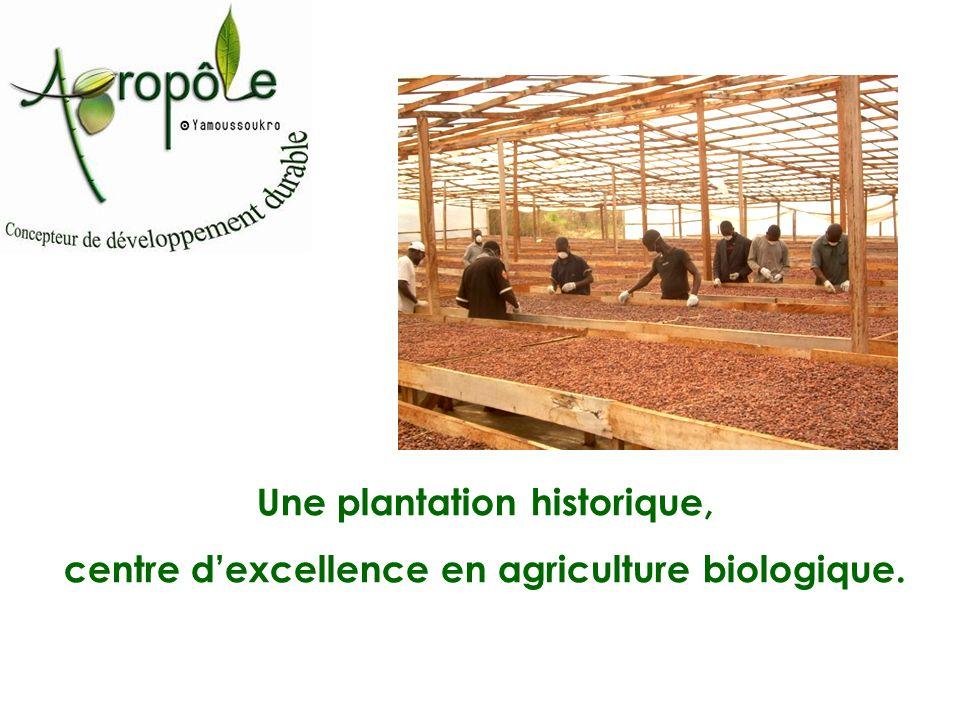 Une plantation historique,