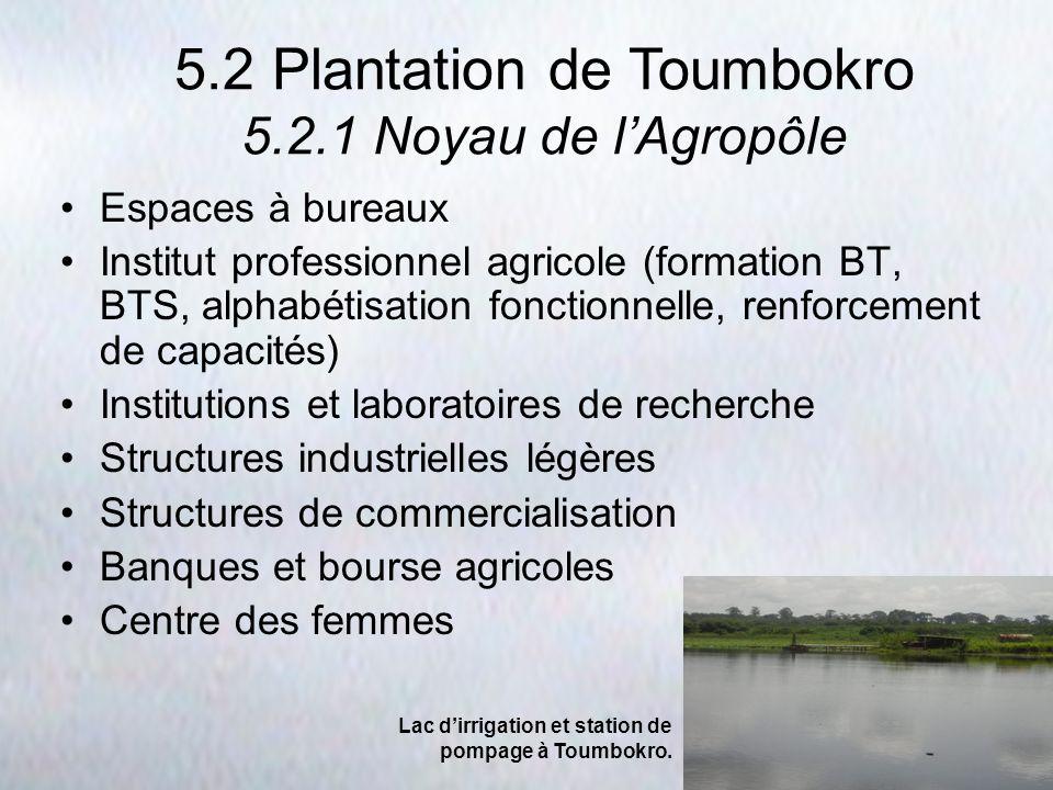 5.2 Plantation de Toumbokro