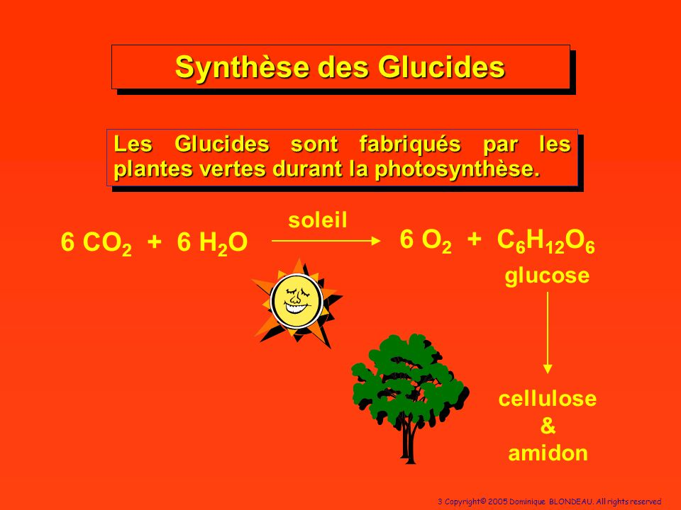 Synthèse des Glucides 6 O2 + C6H12O6 6 CO2 + 6 H2O