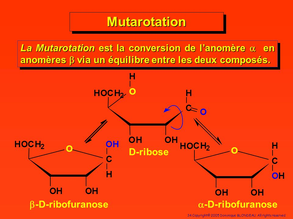 Mutarotation La Mutarotation est la conversion de l'anomère a en anomères b via un équilibre entre les deux composés.