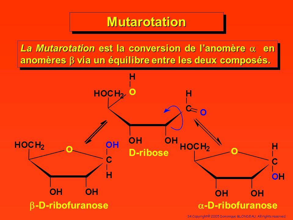 MutarotationLa Mutarotation est la conversion de l'anomère a en anomères b via un équilibre entre les deux composés.