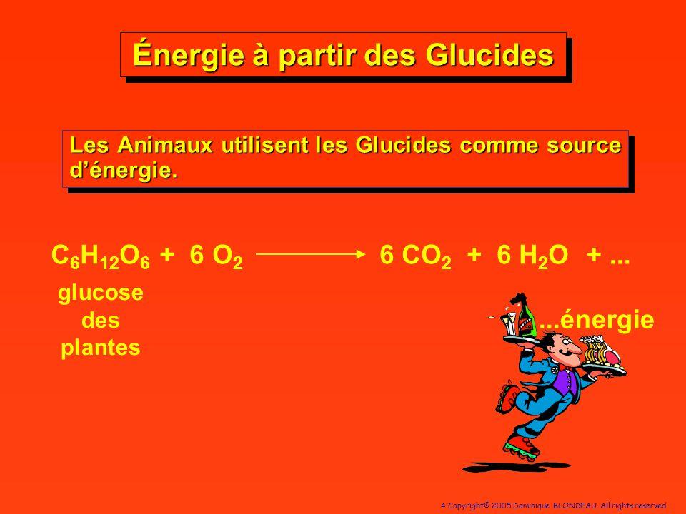 Énergie à partir des Glucides