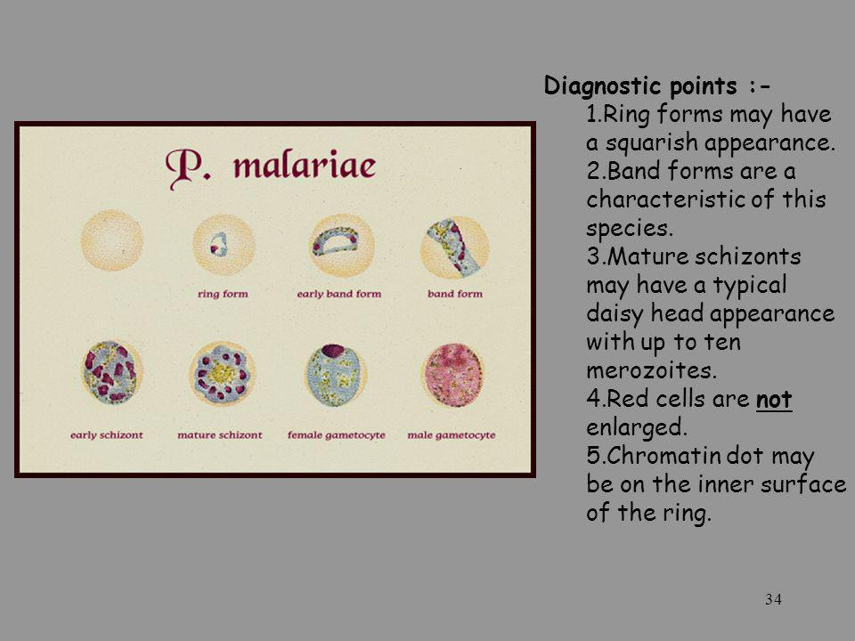 Diagnostic points :- Ring forms may have a squarish appearance.