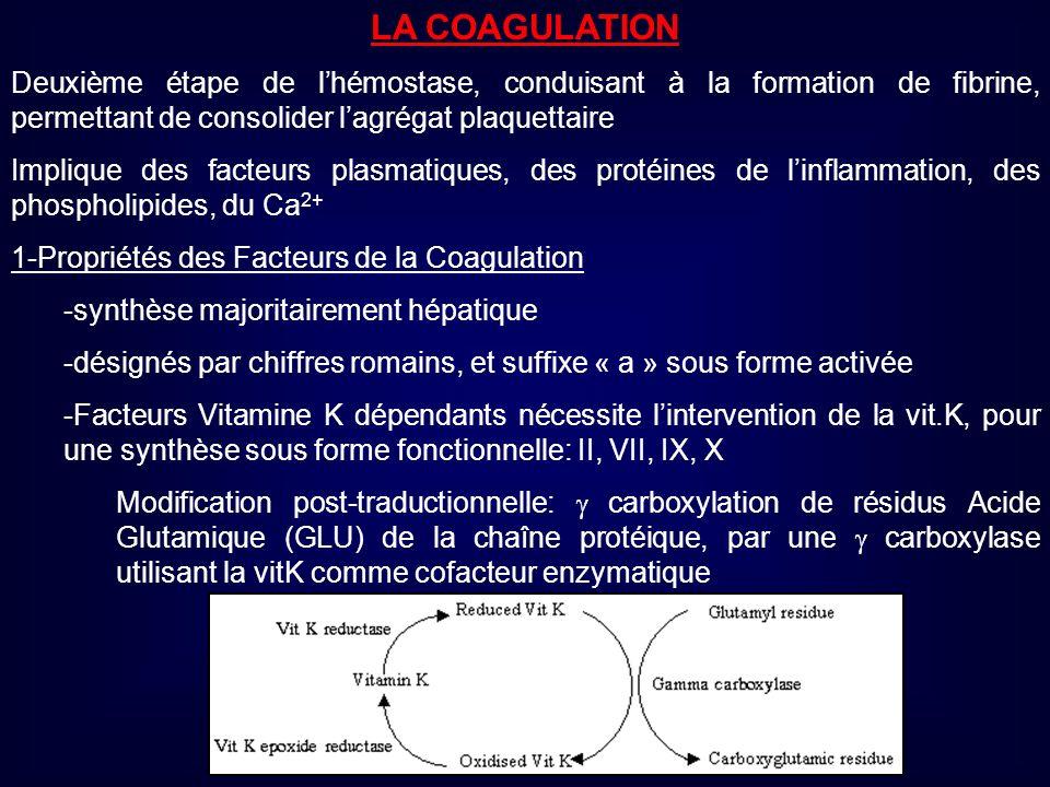 LA COAGULATION Deuxième étape de l'hémostase, conduisant à la formation de fibrine, permettant de consolider l'agrégat plaquettaire.