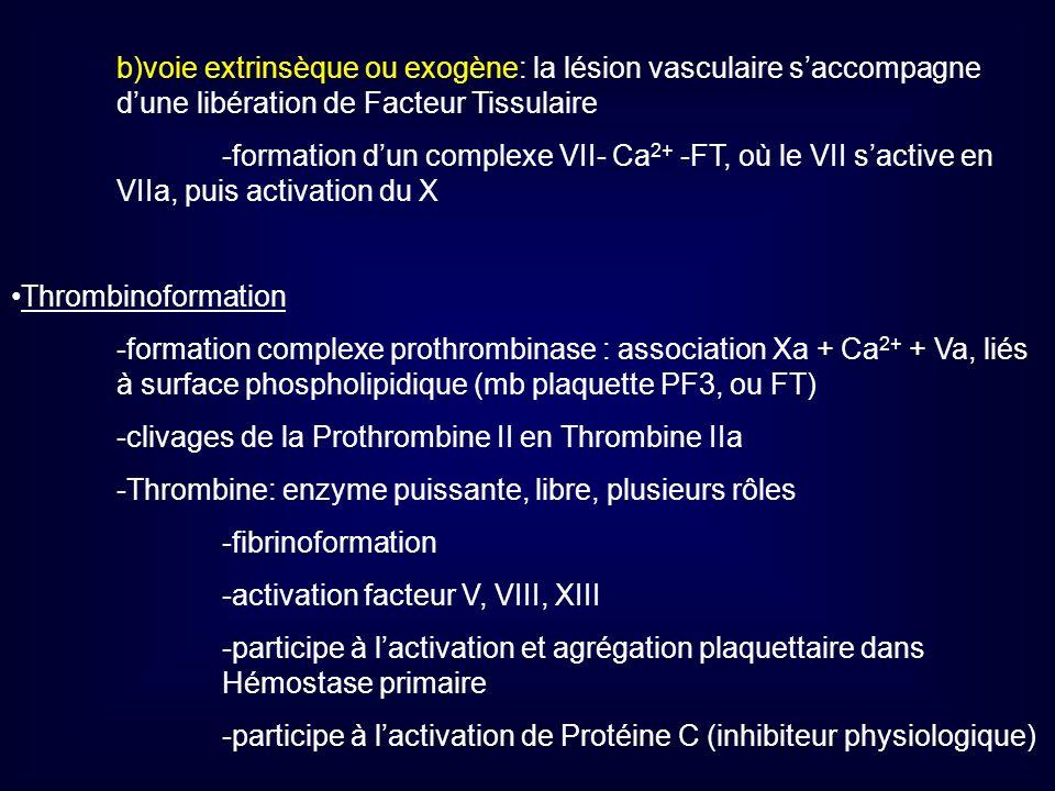 b)voie extrinsèque ou exogène: la lésion vasculaire s'accompagne