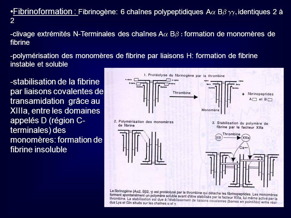 Fibrinoformation : Fibrinogène: 6 chaînes polypeptidiques Aa Bb gg, identiques 2 à 2