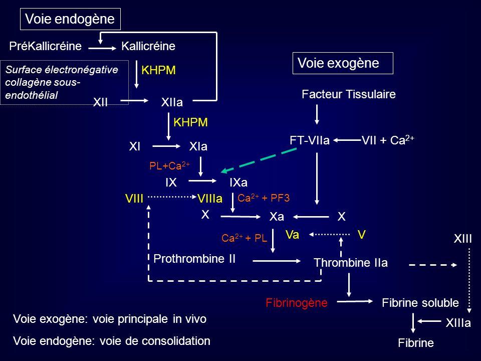 Voie endogène Voie exogène XIa XI XIIa XII Kallicréine PréKallicréine