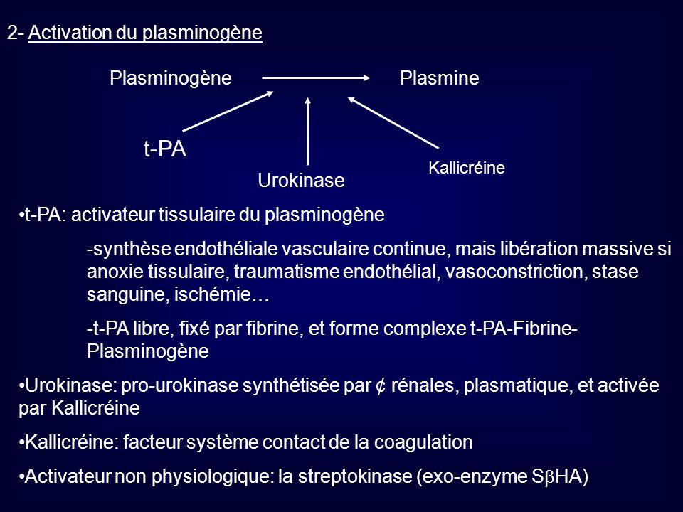t-PA 2- Activation du plasminogène Plasminogène Plasmine Urokinase