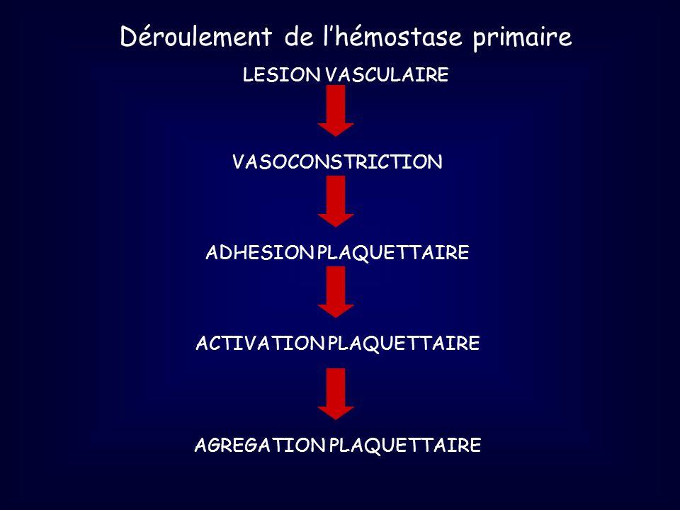 Déroulement de l'hémostase primaire