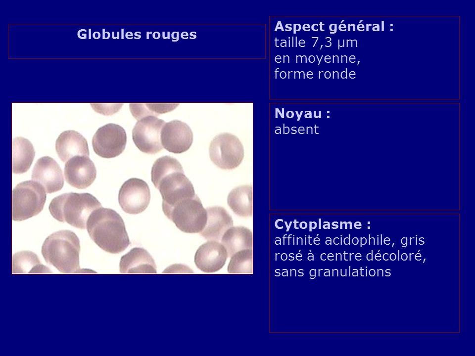Aspect général : taille 7,3 µm en moyenne,
