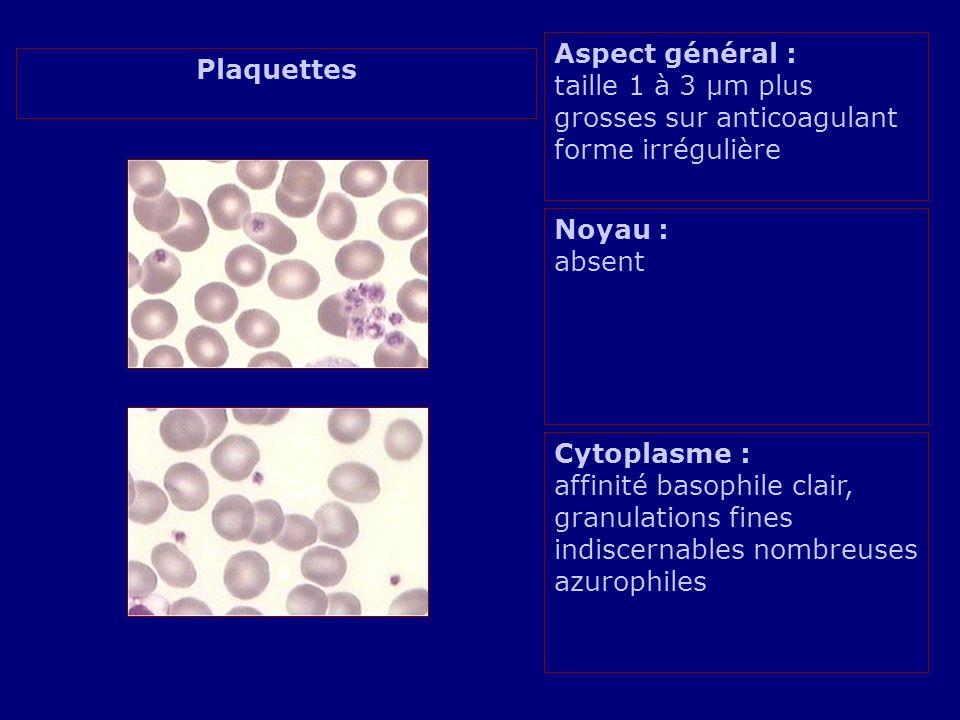 Aspect général : taille 1 à 3 µm plus grosses sur anticoagulant forme irrégulière
