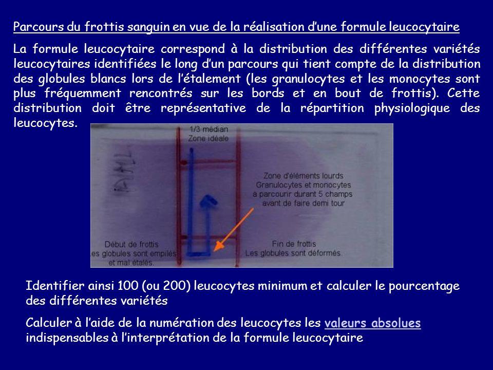 Parcours du frottis sanguin en vue de la réalisation d'une formule leucocytaire