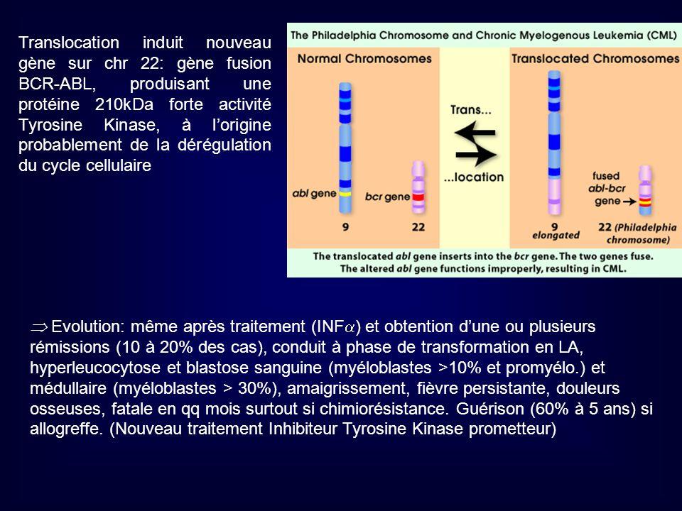 Translocation induit nouveau gène sur chr 22: gène fusion BCR-ABL, produisant une protéine 210kDa forte activité Tyrosine Kinase, à l'origine probablement de la dérégulation du cycle cellulaire