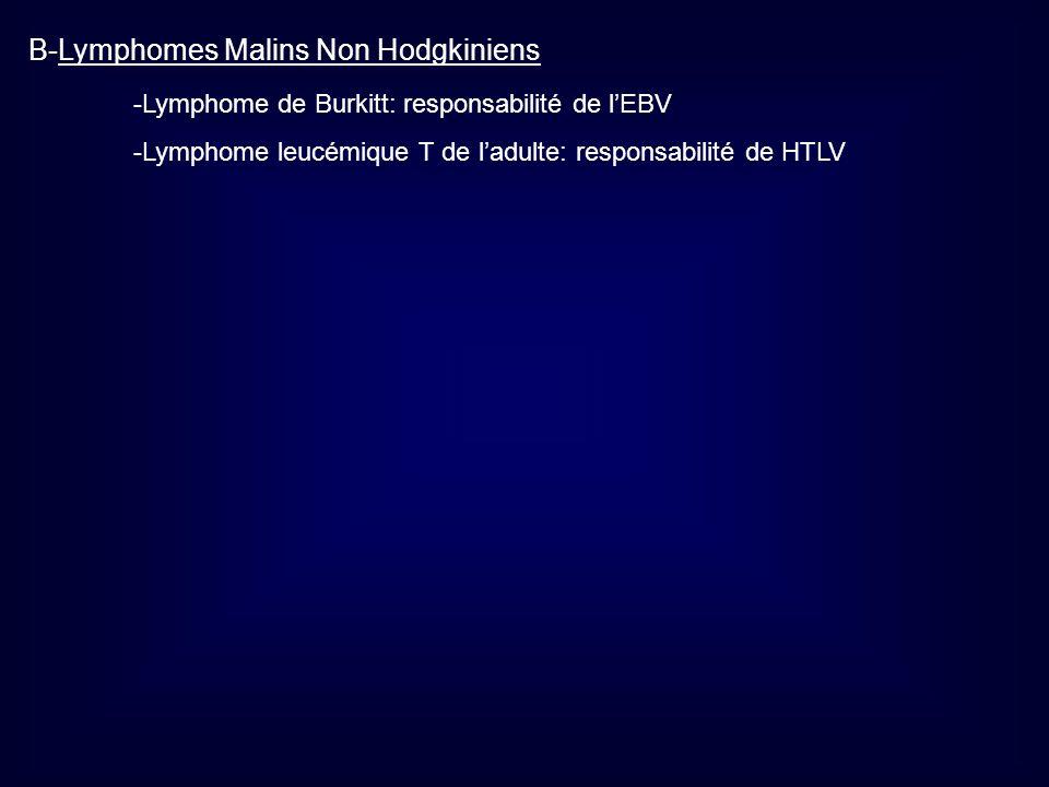 B-Lymphomes Malins Non Hodgkiniens