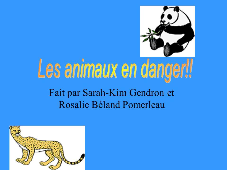 Fait par Sarah-Kim Gendron et Rosalie Béland Pomerleau