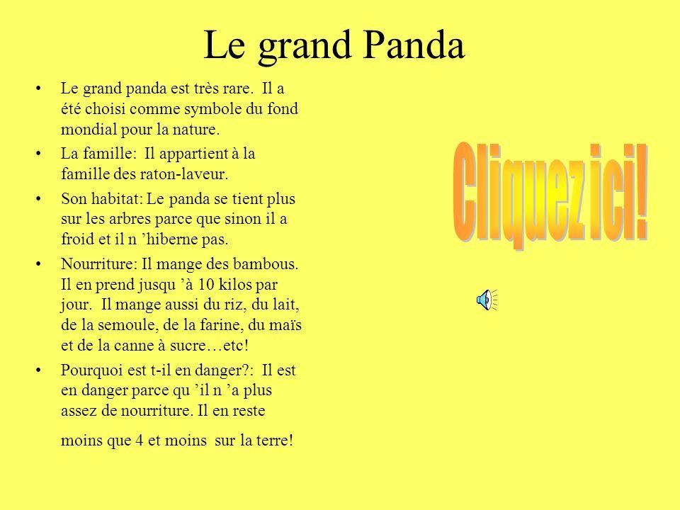 Le grand Panda Cliquez ici!