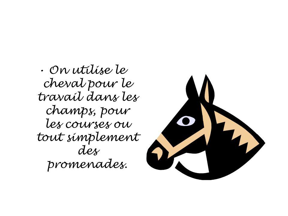 On utilise le cheval pour le travail dans les champs, pour les courses ou tout simplement des promenades.