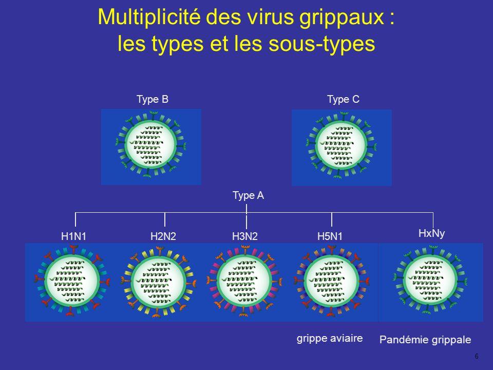Multiplicité des virus grippaux : les types et les sous-types