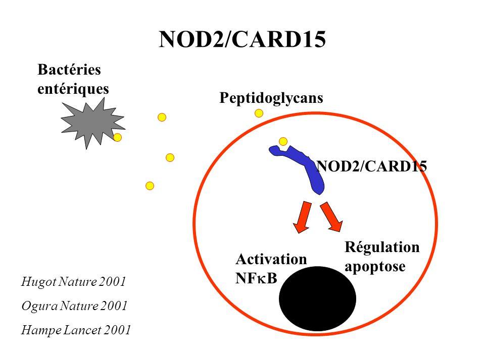NOD2/CARD15 Bactéries entériques Peptidoglycans NOD2/CARD15